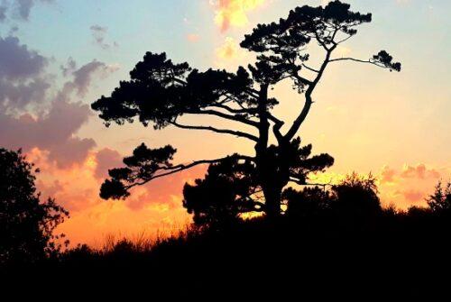 Leela tree grounds